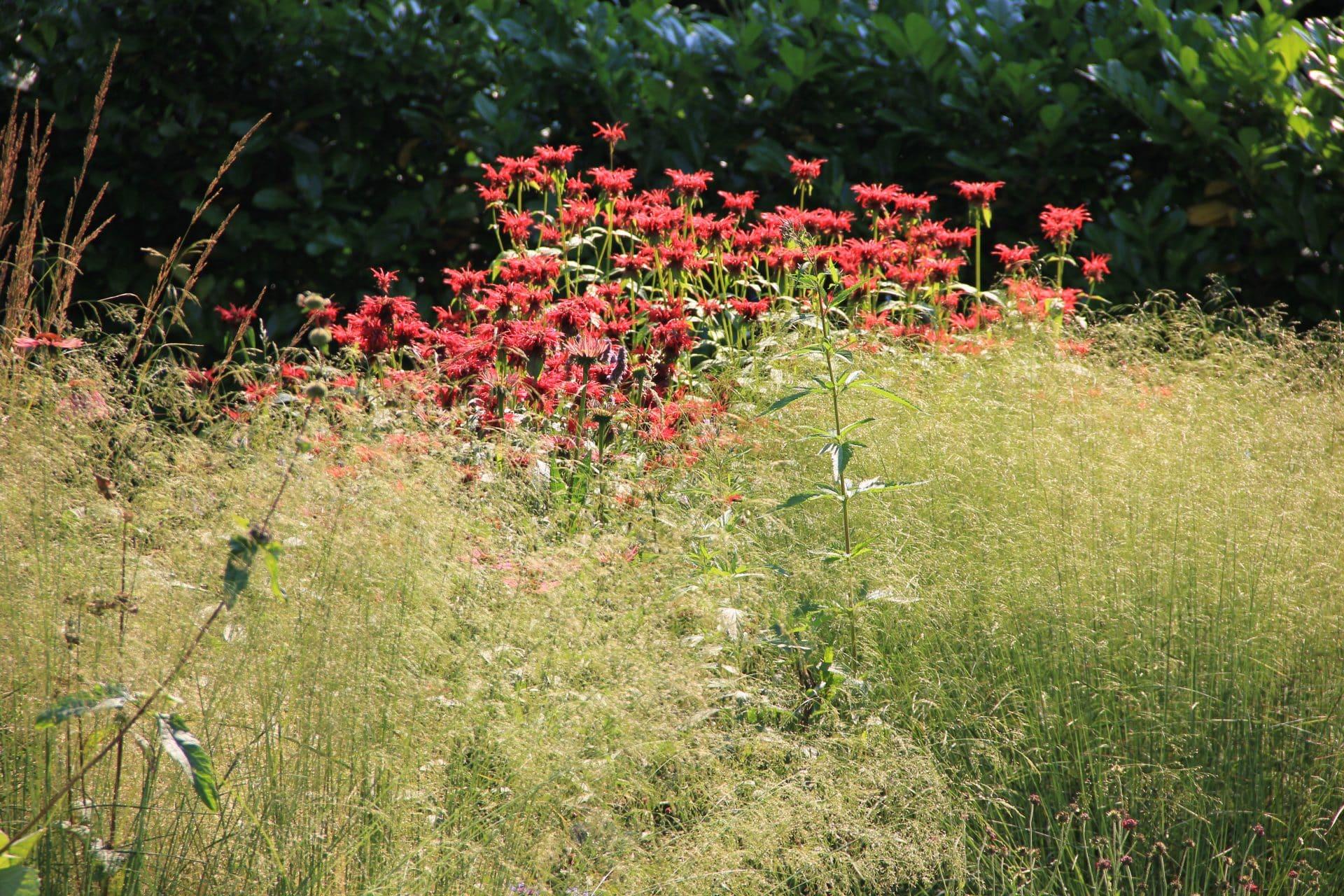 Deschampsia en Monarda Jeroen Hamers