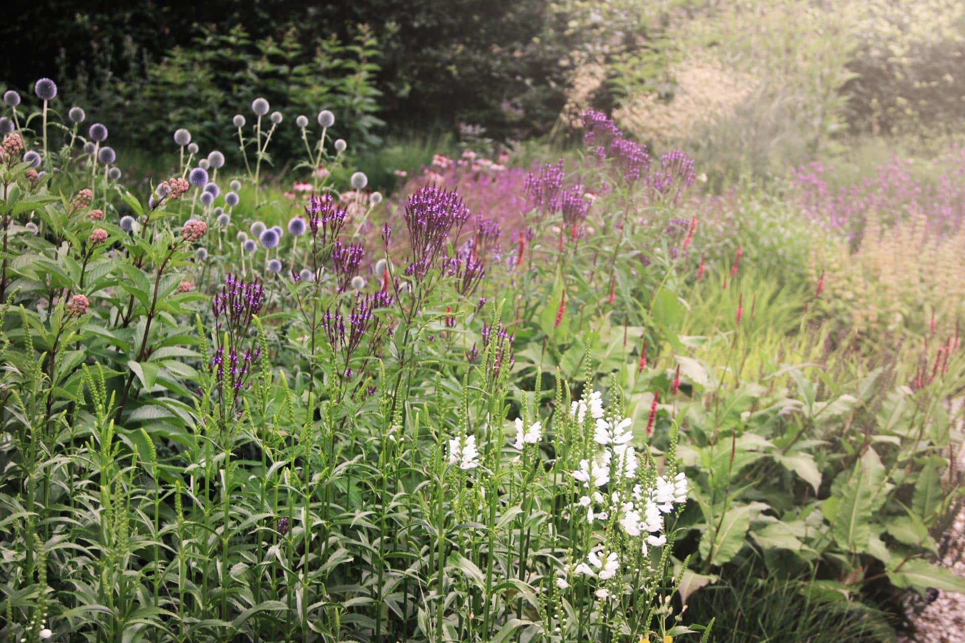 Natuurlijke beplanting bijen en vlinders Jeroen Hamers