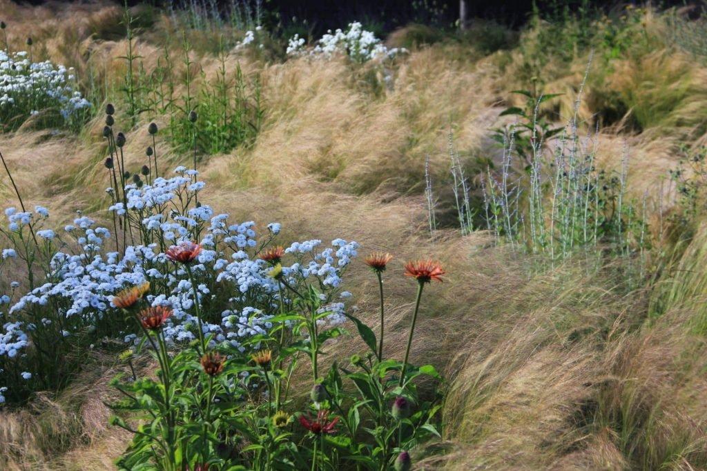 Tuinontwerp Den Haag met vaste planten en siergrassen Jeroen Hamers